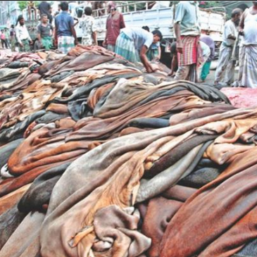 Leather Export From Bangladesh